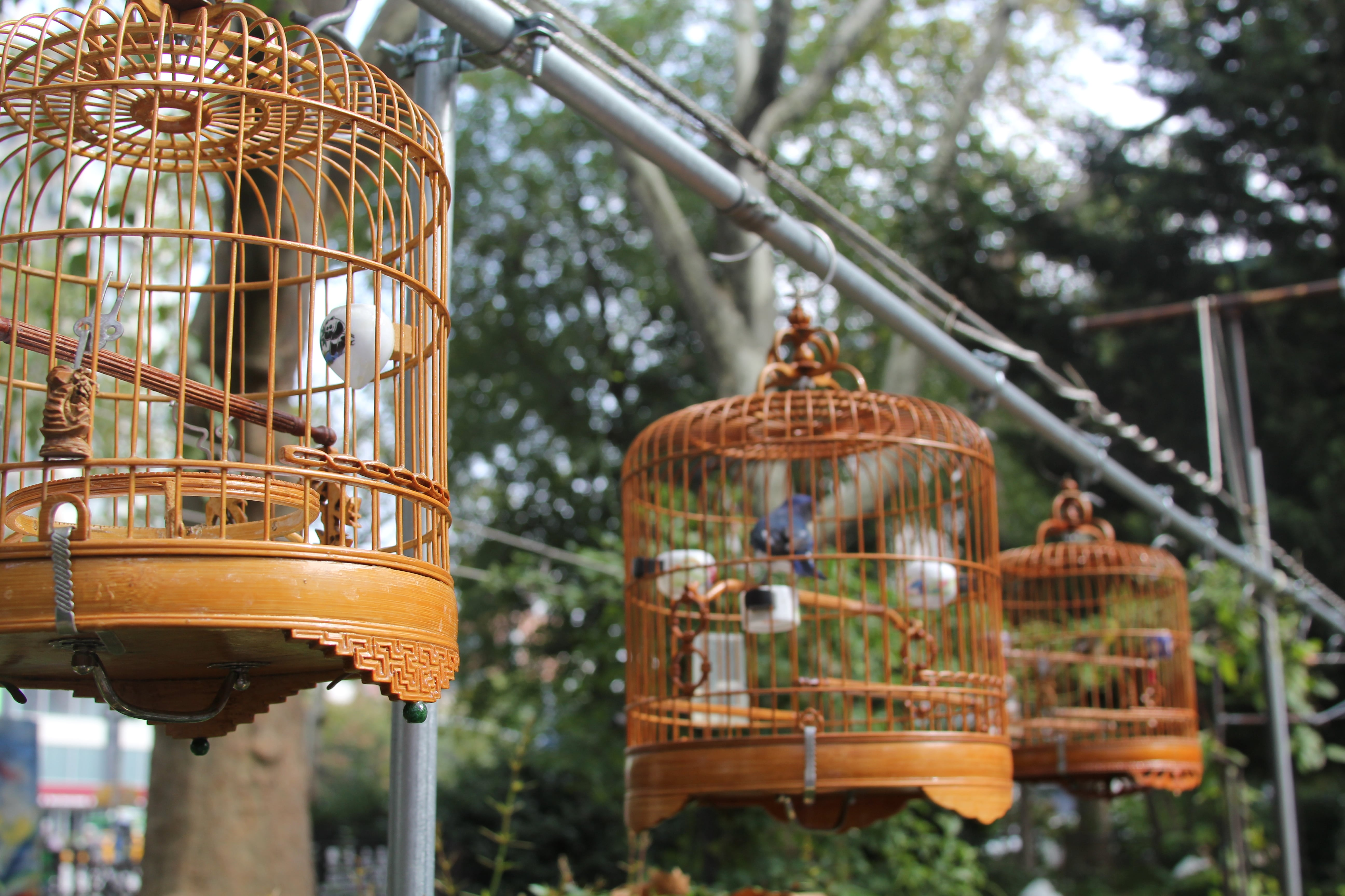 The Hua Mei Bird Sanctuary in Sara Roosevelt Park « Sara D ...